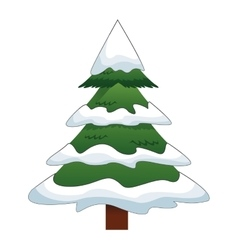 pine tree with snow icon vector image