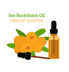 Sea buckthorn natural oil essential oil vector