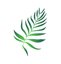 cartoon green fern plant icon vector image