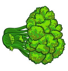 Eco broccoli icon cartoon style vector