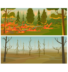 forest fire burn flame trees wild hot weather vector image
