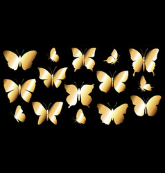golden butterflies vector image