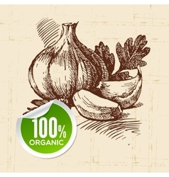 Hand drawn sketch vegetable Eco food background vector