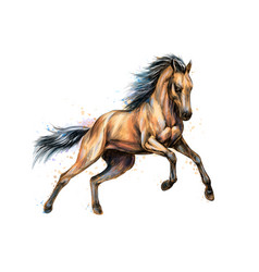 horse run gallop from splash watercolors hand vector image
