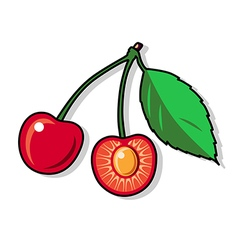 Red cherry isolated on a white background vector image
