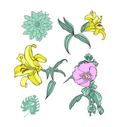 set hand drawing flowers vector image