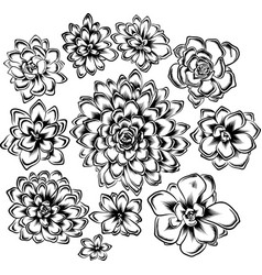 Set of succulents flowers drawings vector