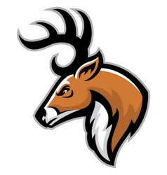 Buck head mascot vector