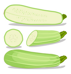 the zucchini vector image vector image