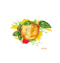 apricot with colorful splashes vector image vector image