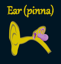 Human organ icon in flat style ear vector