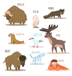 Arctic and Antarctic Animals Birds vector image