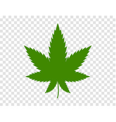 Cannabis leaf on white background illegal drug vector