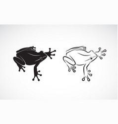 frog design on white background amphibian animal vector image