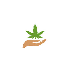hand and marijuana leaves with plant care vector image