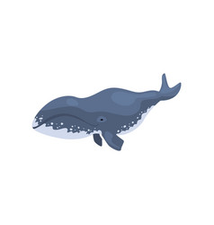 Polar killer whale arctic animal vector