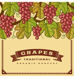 Retro grapes harvest card vector
