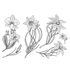 flowers set daffodil and orchid with leaves and vector image vector image