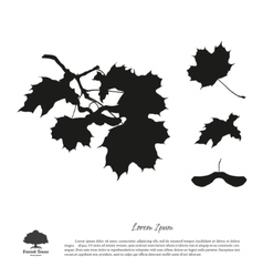 Black silhouette of maple branches vector image vector image