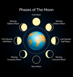 Earth and lunar phase set vector