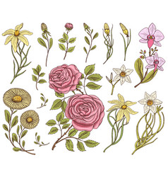 Flowers set roses with leaves and buds herb vector