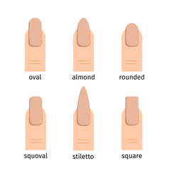 most popular nail shapes with nude manicure vector image