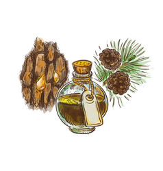 Pine tar in a bottle with branch and bark vector