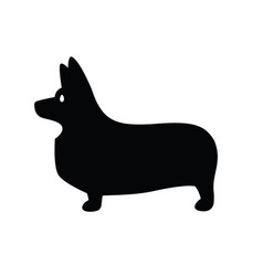 welsh corgi standing in profile vector image
