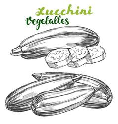 zucchini vegetable set hand drawn vector image