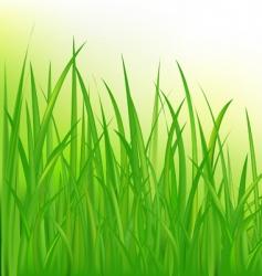 long grass vector image vector image