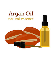 Argan natural oil essential oil cosmetics vector
