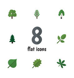 Flat icon ecology set of decoration tree hickory vector