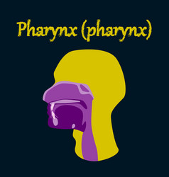 Human organ icon in flat style pharynx vector