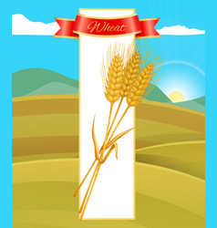 Wheat cereal poster and nature vector