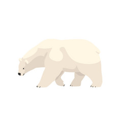 White polar bear arctic animal vector