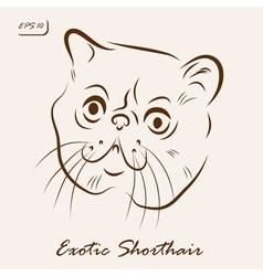 Exotic shorthair vector