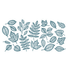 Decorative tree leaves nature forest concept vector