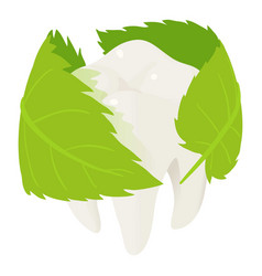 herbal tooth protect icon isometric style vector image