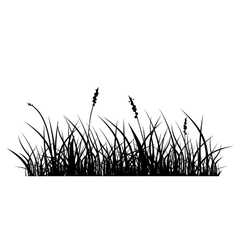 Silhouette of grass vector image vector image
