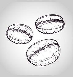 Coffee beans drawing vector