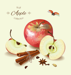 Realistic of apple vector