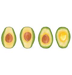 set of realistic avocado evergreen fruit plant vector image