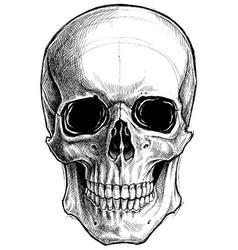 Skull drawing line work vector