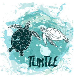 turtles swim in the ocean vector image