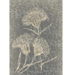 Monochrome cornflowers on grunge texture vector image vector image