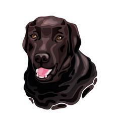 Brown labrador retriever dog head vector