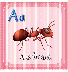 Flashcard A is for ant vector image