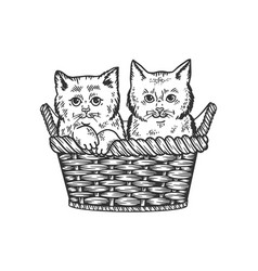 Kittens in basket sketch vector