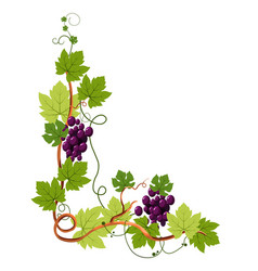 Vine twigs and grape bunches isolated icon vector