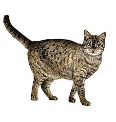 Cat 03 vector
